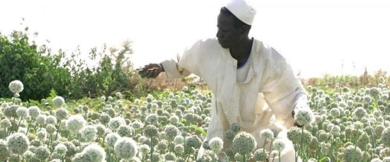 thumb_Sudan cropsharing_1024